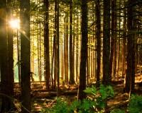 Sunlight in the Sacred Grove